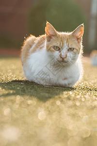 学校操场上的流浪猫图片