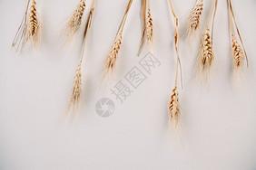 丰收的稻穗图片