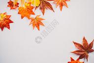 秋天枫叶文艺500532348图片