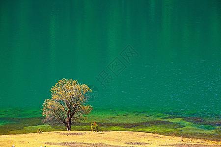 碧绿湖边一棵树图片