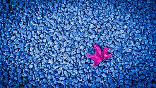 秋天红色枫叶在青石子路面图片