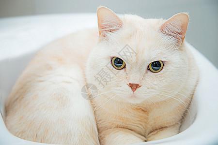 萌宠猫喵图片