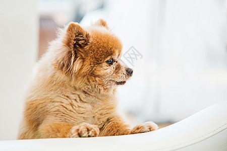 萌宠小狗狗图片