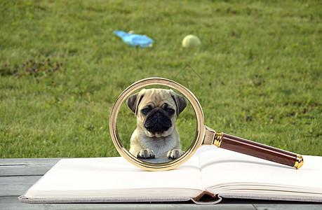 放大镜下的小狗图片