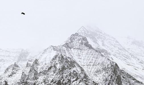 雪山和鸟图片