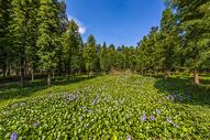 森林绿地鲜花图片