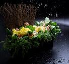 蔬菜菌菇拼盘图片