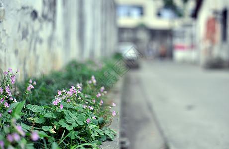小巷野花图片