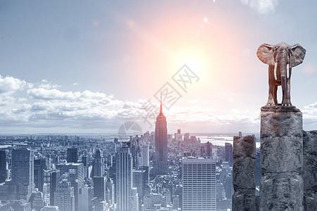 站在城市最高处的大象图片