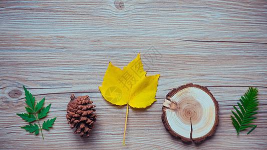 秋天黄色叶子背景图片