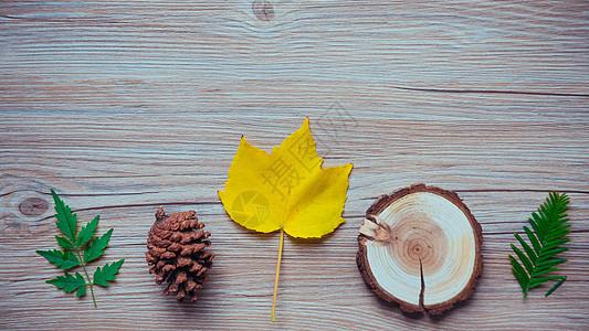 秋天黄色叶子素材图片