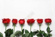 整齐排列的红玫瑰七夕情人节白色静物背景素材图片