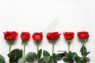 红玫瑰七夕情人节白色静物背景素材图片