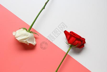 七夕情人节红玫瑰白玫瑰 粉色静物背景素材图片