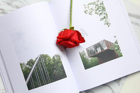 书上的一朵红玫瑰 七夕情人节素材图片