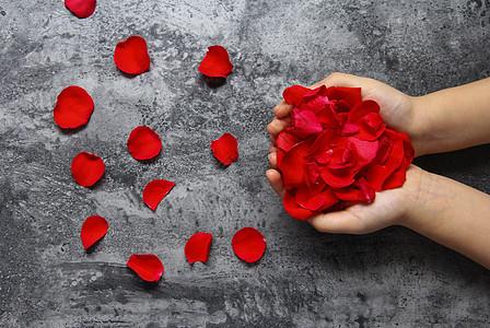 双手捧着红玫瑰花瓣七夕情人节静物背景素材图片