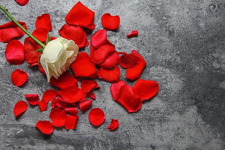 七夕情人节红玫瑰白玫瑰花瓣静物背景素材图片