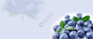 蓝莓水果banner图片
