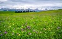 新疆喀拉峻草原图片