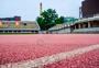 清华大学的体育场图片