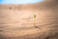 沙漠中的生命图片