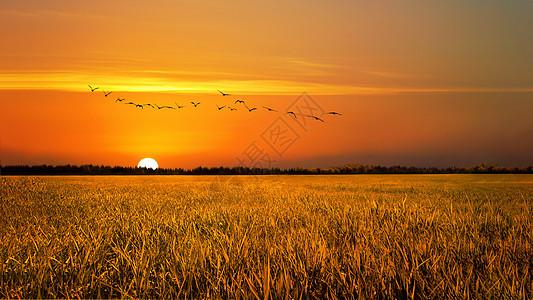 夕阳下的稻田图片
