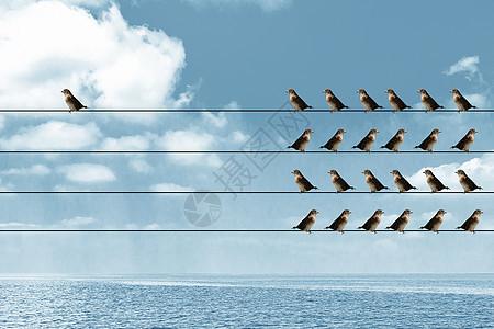 一只鸽子孤立无援图片