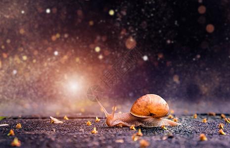 唯美蜗牛背景图片