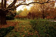 唯美的秋色图片