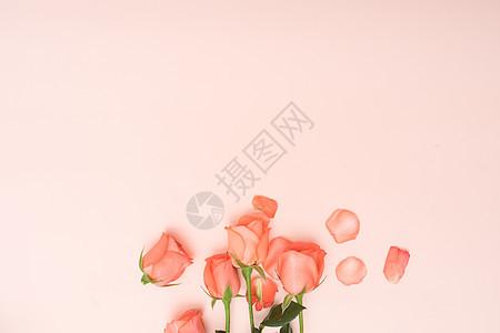 玫瑰花与玫瑰花花瓣图片