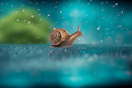 雨中的蜗牛图片