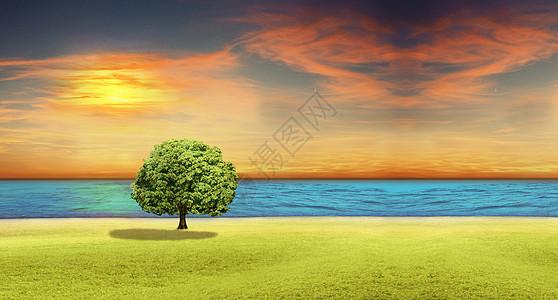 夕阳下树草地图片