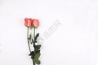 玫瑰花的素材图片
