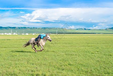 草原骑马图片
