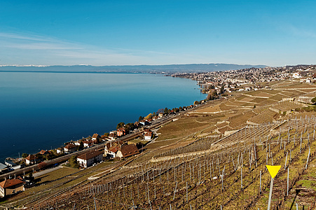 瑞士的日内瓦湖的葡萄庄园图片