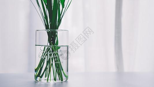 花瓶绿叶特写图片