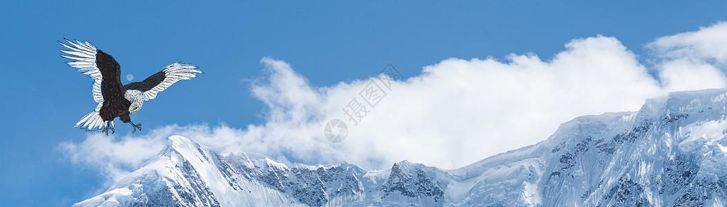 老鹰背景banner图片