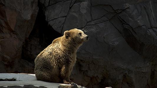 等待喂食的熊图片