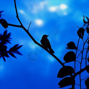 一只鸟的剪影图片
