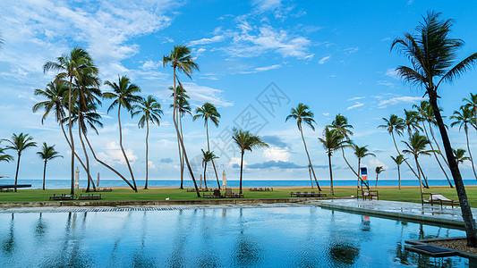 斯里兰卡海边的椰树图片