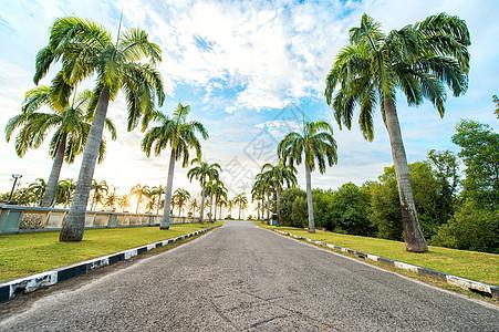 热带椰树大道图片