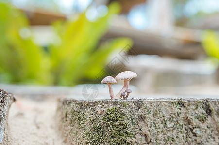 生长的蘑菇图片