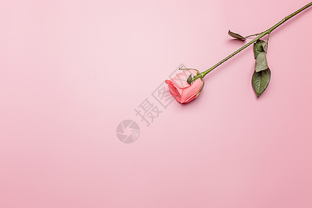情人节七夕浪漫玫瑰花图片