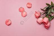 漂亮的情人节七夕玫瑰图片