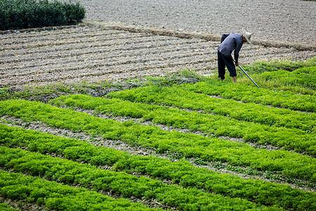 田间劳作的农民图片