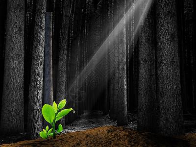树林里的萌芽图片