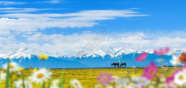 雪山马匹图片