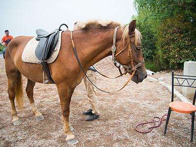 马匹特写图片