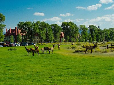 黄石公园的一景图片