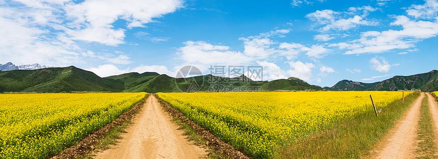 川西八美油菜花春天美景图片